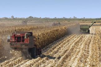 Corn harvest, San Joaquin Delta, California